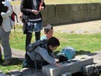 興源寺の池に汽水域の貝観察